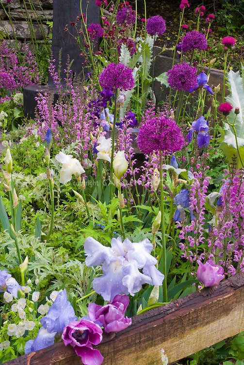 Lush beautiful flower garden in spring plant flower - Plants with blue flowers a splash of colors in the garden ...