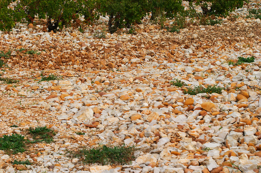 Vines with the typical soil in Chateauneuf, big stone pebbles called galet galets  Chateauneuf-du-Pape Châteauneuf, Vaucluse, Provence, France, Europe  Chateauneuf-du-Pape Châteauneuf, Vaucluse, Provence, France, Europe