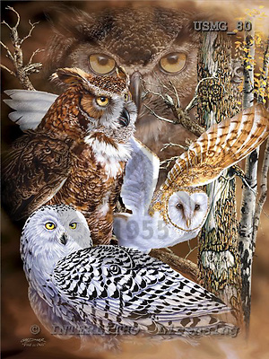Steven-Michael, REALISTIC ANIMALS, paintings+++++,USMG80,#A# realistische Tiere, realista, illustrations, pinturas ,puzzles