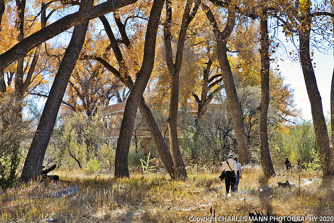 Los Luceros is a grand historical hacienda and home site on the Rio Grande River in the Espanola Valley near the village of Alcalde, New Mexico, Visitors walk in the cottonwood bosque near the River House on the banks of the Rio garnde.