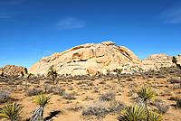 Echo Rock at Joshua Tree National Park