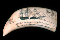 historic scrimshaw, .sperm whale tooth, .Physeter macrocephalus, .Oahu, Hawaii.
