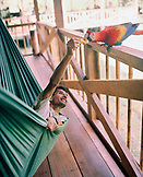 PERU, Amazon Rainforest, South America, Latin America, man feeding Macaw bird while lying in hammock at the Tambopata Research Center.