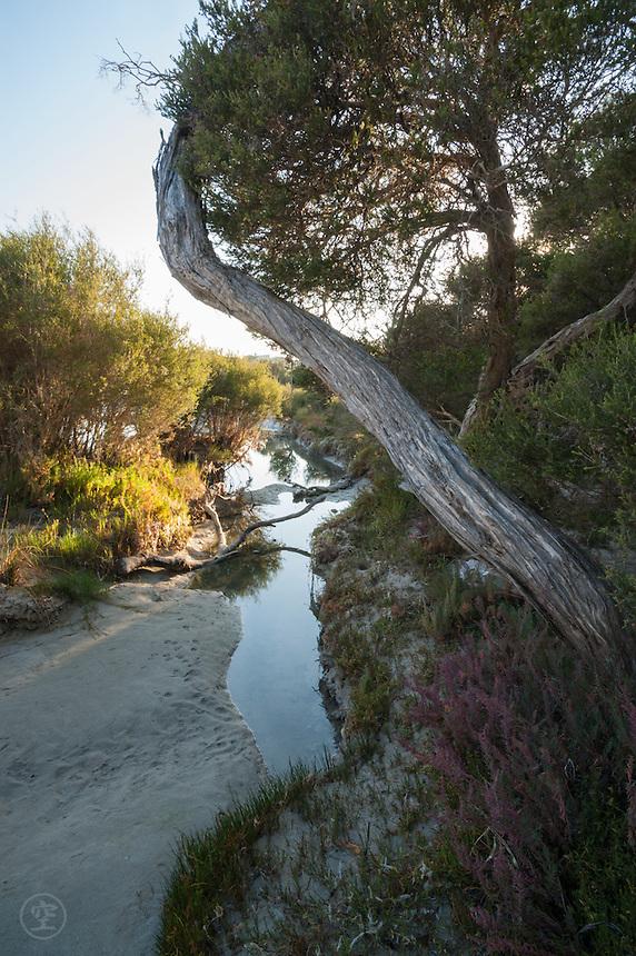 Morning light illuminates the wetland vegetation along a beloved walk.