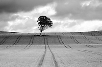 Lone Tree near West Kilbride, Ayrshire