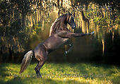 Bob, ANIMALS, collage, horses, photos(GBLA756,#A#) Pferde, caballos