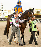 January 25, 2020: #12, Magic Wand (IRE), always the bridesmaid, as she finishes 2nd in the $1,000,000 Pegasus World Cup Turf Invitational for Trainer Aidan O'Brien at Gulfstream Park on January 25, 2020 in Hallandale Beach, FL. (Photo by Carson Dennis/Eclipse Sportswire/CSM)