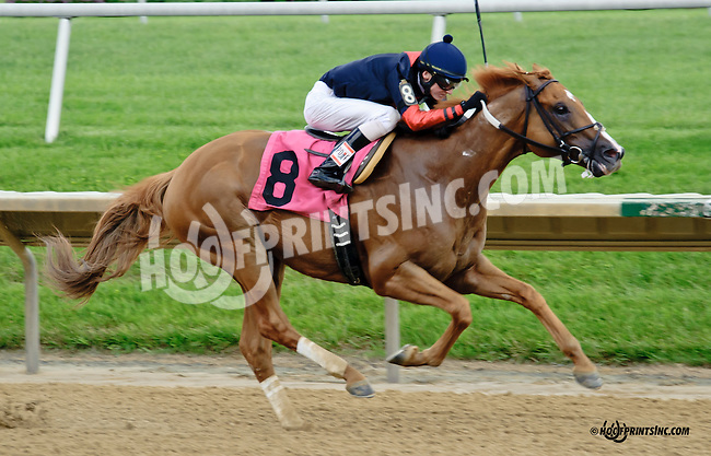 Storm Pursuit winning The Michael T. D'Angelo Memorial Race at Delaware Park racetrack on 6/5/14