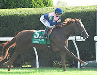 Lexington KY - October 7 Zipessa wins the 20th running of the First Lady (Grade 1) for owner Empyrean Stables, trainer Michael Stidham and jockey Joe Bravo.  October 7, 2017