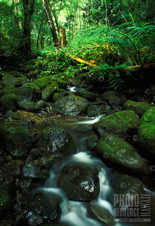 A tranquil stream awaits hikers along the trail to Manoa falls, Oahu.