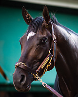 BALTIMORE, MD - MAY 18: Always Dreaming poses for the camera after receiving a bath in preparation for the Preakness Stakes at Pimlico Race Course on May 18, 2017 in Baltimore, Maryland.(Photo by Douglas DeFelice/Eclipse Sportswire/Getty Images)