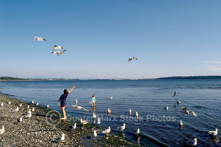 Children feeding Birds in Pacific Ocean at Semiahmoo Bay, White Rock, BC, British Columbia, Canada