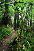 River Loop Trail through forest, Newhalem Campground, North Cascades, Washington State, USA