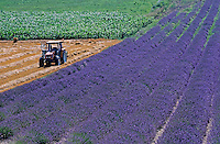 Tractor in a lavender field, Grignan, Provence, France.