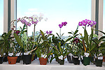 2019_10_05 Deep Cut Orchid Society Orchid Auction