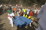 Men cover a bull as a man goes for the final thrust during the bull of the plain 'Toro de la Vega' festival, on September 15, 2009 in Tordesillas. The festival is one of the oldest in Spain with roots dating back to the fifteenth century. The bull has to be enticed across the river from the village to the plain 'Vega' before it can be killed to honour the 'Virgen de la Pena'.  © Pedro ARMESTRE.