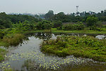 Urban wetland in city, Diyasaru Park, Colombo, Sri Lanka