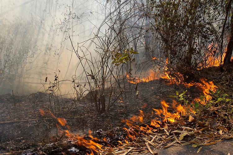 Wild fires in the rain forest of Kanchanaburi region in western Thailand