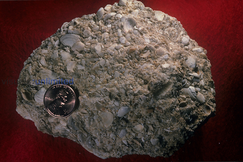 Coquina Limestone with coin scale object