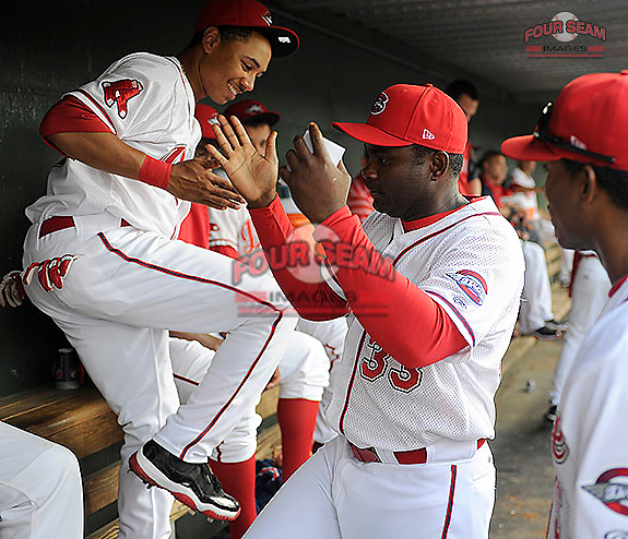 Infielder Mookie Betts (7) of the Greenville Drive, left, slaps hands with manager Carlos Febles (33) in the dugout just before a game against the West Virginia Power on Tuesday, April 16, 2013, at Fluor Field at the West End in Greenville, South Carolina. West Virginia won, 8-3. (Tom Priddy/Four Seam Images)