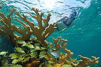 Julie Mozeika snorkeling<br /> Hawksnest Bay<br /> Virgin Islands National Park<br /> St. John, U.S. Virgin Islands