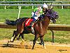 Madjikman (Madjani - Rubie Rose) winning at Delaware Park on 9/12/16