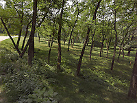 FOREST_LOCATION_90011