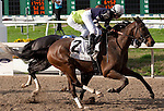 Feb 2011:  Demarcation and Anna Napravnik (2) win the Mineshaft handicap at the Fairgrounds in New Orleans, Louisiana.