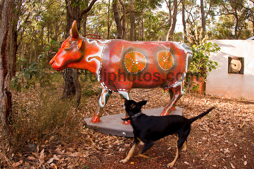 KarriCow.  Margaret River, Western Australia (Monday, March 22, 2010) A Moo-ving event. CowParade has become the largest and most successful public art event in the world. CowParade has captured the imagination of more than a million people world wide and has been seen i over 60 cities including New York, London, Tokyo, Paris and Sydney..CowParade margaret River us an udderly fantastic event and is the first region in the world to have the rights to host artistic event. The event is a natural fit for the region considering cows have formed a fundamental part of the social fabric since the early 1920's...Photo: joliphotos.com