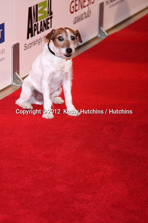 LOS ANGELES - MAR 24:  Uggie arrives at  the 2012 Genesis Awards at the Beverly Hilton Hotel on March 24, 2012 in Beverly Hills, CA