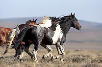 Horses - Wild -  Action