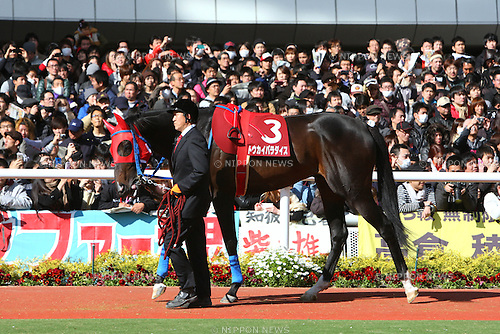 Tokai Paradise,<br /> APRIL 6, 2014 - Horse Racing :<br /> Tokai Paradise is led through the paddock before the Sankei Osaka Hai at Hanshin Racecourse in Hyogo, Japan. (Photo by Eiichi Yamane/AFLO)