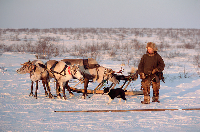 Velodia Dirkatch, a Sami man from Lovozero, with his reindeer sled. Murmansk, NW Russia
