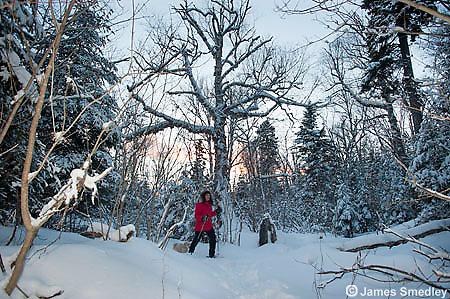 Snowshoeing in winter.