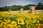 Haribo from the publicity caravan heads through the sunflower fields during Stage 16 of the 2018 Tour de France running 218km from Carcassonne to Bagneres-de-Luchon, France. 24th July 2018. <br /> Picture: ASO/Bruno Bade | Cyclefile<br /> All photos usage must carry mandatory copyright credit (© Cyclefile | ASO/Bruno Bade)