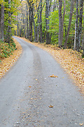 Leaf drop along Long Pond Road (the old North and South Road) in Benton, New Hampshire USA during the autumn season.