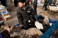 Uighurs arrive at the Kashgar Sunday Animal Market with lambs and sheep for sale outside Kashgar, Xinjiang, China.