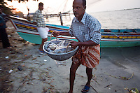 20080202_Fort Kochin, India_ Fisherman attempt to sell cuttlefish in a market near an area know as the Chinese Fishing Nets in Fort Kochin, which is located in the Southern Indian state of Kerala.  Photographer: Daniel J. Groshong/Tayo Photo Group
