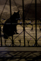 Sao Paulo_SP, Brasil...Silhueta de um gato...A cat silhouette...Foto: MARCUS DESIMONI / NITRO