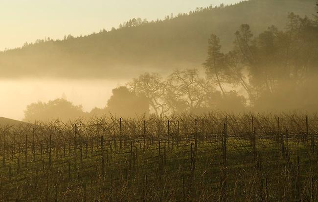 Sunrise over a vineyard in St. Helena