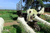TANZANIA Tanga, Usambara Mountains, Sisal farming and industry, D.D. Ruhinda & Company Ltd., Mkumbara Sisal estate, drying of sisal fibre in the sun / TANSANIA Tanga, Sisal Industrie, D.D. Ruhinda & Company Ltd., Mkumbara Sisal estate, Trocknen der Sisalfaser in der Sonne