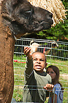 Photo by Phil Grout..2.  Ethan's patience is tested as he tries to feed his new friend a .little more grain.