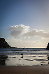 Dog running on the beach at Silver Strand, Or Trabane Beach, near Malin Beg, Donegal, on Ireland's Wild Atlantic Way.