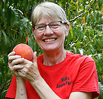 Sherry Chase of Mills Apple Farms holds an especially large Harmony variety peach.