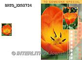 Alfredo, FLOWERS, BLUMEN, FLORES,  photos+++++,BRTOXX02734,#F#