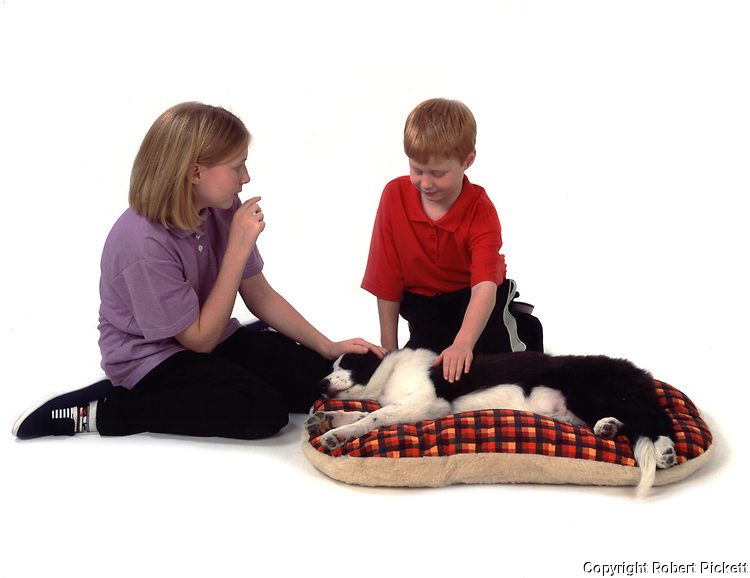 Young girl asking young boy to be quite whilst puppy border collie dog sleeps on basket, 12 & 7 years old, studio, white background, cut out, pet, domestic,