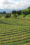 vineyard, Los Olvios