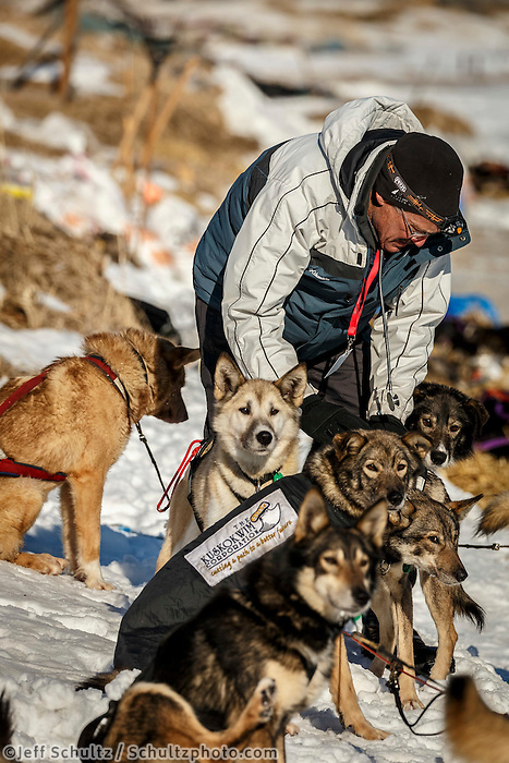 Volunteer Vet Dale Baker examines Richie Diehl dogs shortly after his arrival at the Unalakleet checkpoint on Sunday March 13th during the 2016 Iditarod.  Alaska    <br /> <br /> Photo by Jeff Schultz (C) 2016  ALL RIGHTS RESERVED