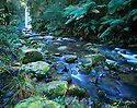 Australia, Victoria, Otway Ranges, Hopetown Falls and creek with moss-covered rocks, in temperate rainforest with Southern beech and fern trees