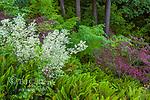 Japanese Maple Garden, Fern Canyon, Mill Valley, California